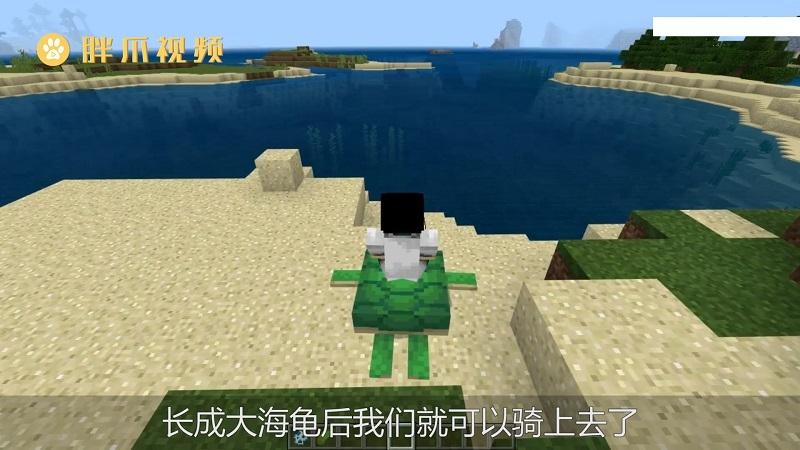 我的世界海龟怎么骑(5)
