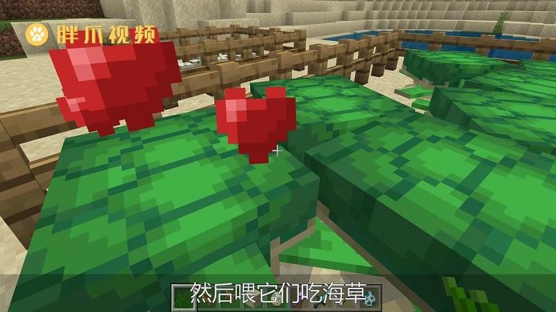 我的世界海龟怎么骑(2)