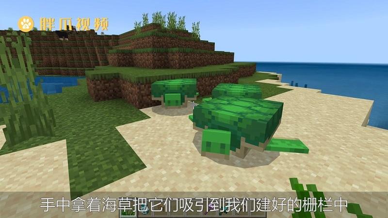我的世界海龟怎么骑(1)