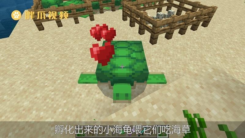 我的世界海龟怎么骑(4)