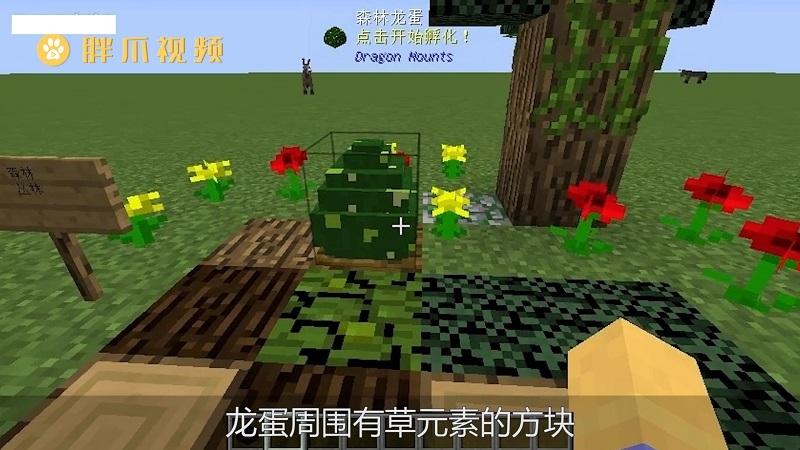 我的世界龙蛋怎么孵化(3)
