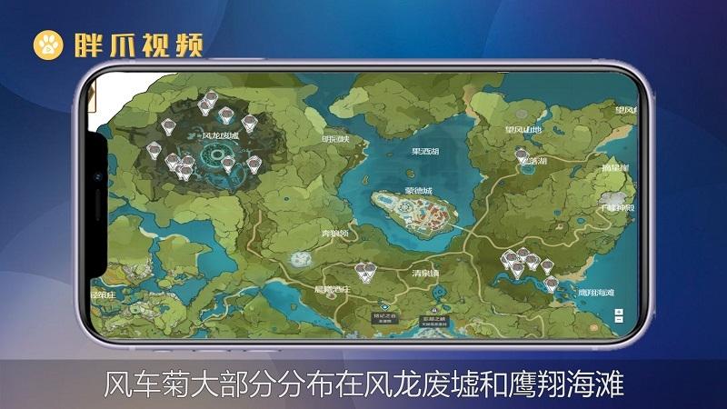 风车菊原神位置(1)